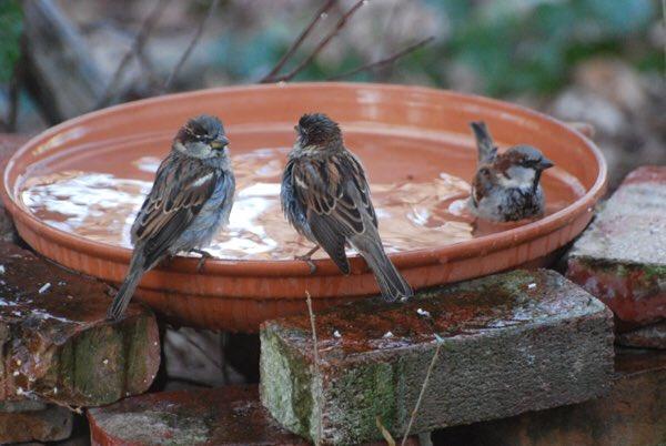 SAVE BIRDS,