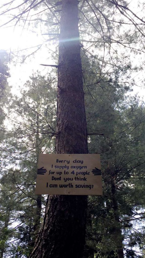 Ayubia National Park,Ayubia ,National Park, Thandiani, Nathiagali, Ayubia ,Khanspur,Pakistan,Save Trees,Save Plaent,Think About It