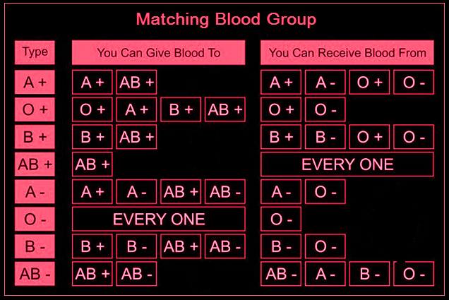 Important Information About Matching Blood Group for Blood Donor and Recipient, Important Information, About Matching Blood Group,Blood Donor and Recipient,Blood Donor,Blood Recipient,O negative blood group, AB positive Blood group